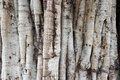 Old Tree Bark Natural Texture Background Stock Image - 58974261