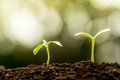 Young Plant Growing In Soil Royalty Free Stock Photography - 58978037