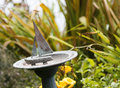 Old Sailboat Birdbath In A Colorful Garden Royalty Free Stock Image - 58978766