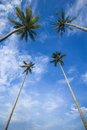 Coconut Palm Trees Reaching Out To Skies Stock Photo - 5900740