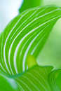 Mysterious Beautiful Green Leaf. Royalty Free Stock Photography - 5915727