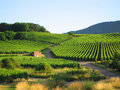 Vineyard In Alsace Stock Photography - 5918782