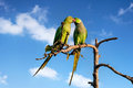 Parakeets In India Stock Photography - 59112832