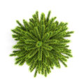 Top View Christmas Tree Without Ornaments On A White Stock Image - 59131431