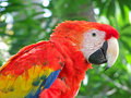 Parrot Stock Images - 5921334