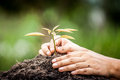 Closeup Hand Planting Young Tree In Soil On Green Background Royalty Free Stock Images - 59205729