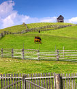 Farm Scene With Cows Enclosed By A Wooden Fence And Cottage On T Royalty Free Stock Image - 59209166