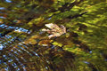 Clear Water With Leaf Stock Photo - 59227690