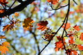 Autumn Colorful Leaves Background Tree Stock Image - 59256101