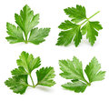Parsley Herb Isolated Stock Photo - 59329730