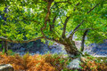 Rocks With Moss And Autumn In An Old Beech Forest Samothraki Royalty Free Stock Photos - 59343568