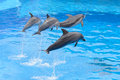 Bottlenose Dolphin Jumping Royalty Free Stock Images - 59347799