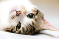 Up Side Down Cat Royalty Free Stock Image - 59347986