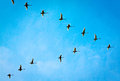 Flying Wild Goose Stock Images - 59422854
