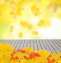 Fall Leaves Stock Image - 59459991
