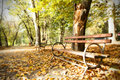 Wooden Bench In Autumn Park Stock Photos - 59462833