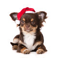 Chihuahua Puppy In A Santa Hat Royalty Free Stock Photos - 59477698