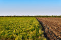 Green And Yellow Farm Field Over Blue Sky Stock Photography - 59526332
