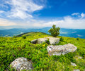 Tree And Boulders On Hillside Meadow In Mountain At Sunrise Royalty Free Stock Photos - 59566288