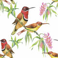 Watercolor Wild Exotic Birds On Flowers Seamless Pattern On White Background Royalty Free Stock Image - 59570226