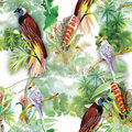Watercolor Wild Exotic Birds On Flowers Seamless Pattern On White Background Royalty Free Stock Images - 59570249