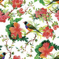 Watercolor Wild Exotic Birds On Flowers Seamless Pattern On White Background Royalty Free Stock Images - 59570279