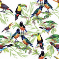 Watercolor Wild Exotic Birds On Flowers Seamless Pattern On White Background Stock Photo - 59570460