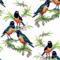 Watercolor Wild Exotic Birds On Flowers Seamless Pattern On White Background Stock Photos - 59570513