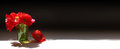 Red Poppies Banner Stock Images - 59571094