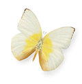 Yellow And Beige Butterfly Isolated On White Stock Image - 59583311