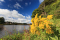 Beautiful Flower And Scene Of River Dee - Aberdeen Royalty Free Stock Photos - 59697148