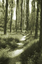Forest In Monochrome Royalty Free Stock Images - 5972749