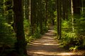 Forest Path Royalty Free Stock Image - 59740056