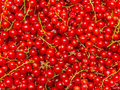 Background Made Of Red Currant Berries Stock Photo - 59750720