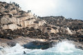 Seal Island In False Bay, South Africa Royalty Free Stock Image - 59791016