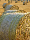 Harvest Time Royalty Free Stock Images - 5984489