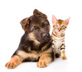 Bengal Cat And German Shepherd Puppy Dog Looking At Camera. Isolated Royalty Free Stock Photo - 59804325