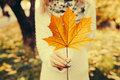 Autumn Leaves In Girl Hands Stock Photos - 59824673