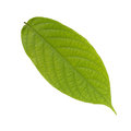 Green Leaves Stock Images - 59879454