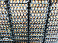 Egg On Pack Stock Images - 59910494