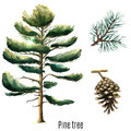 Watercolor Pine Tree. Royalty Free Stock Images - 59924899