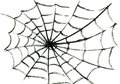 Spider S Web Stock Photos - 59972203