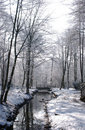 Worsley Woods In Winter Stock Photography - 607962