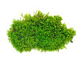 Green Moss Stock Images - 60012024