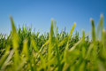 Grass And Blue Sky Royalty Free Stock Images - 60018959