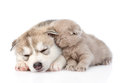 Scottish Kitten And Siberian Husky Puppy Sleeping Together. Isolated Royalty Free Stock Photo - 60032125