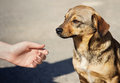 Child Hand And Lonely Homeless Dog Royalty Free Stock Photo - 60107035