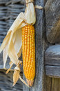 Dried Corn Royalty Free Stock Photo - 60129885