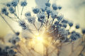 Frozen Meadow Plant Royalty Free Stock Images - 60142769