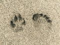 Dog And Human Footprint Stock Photography - 60146712